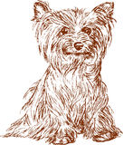 Little dog vector illustration
