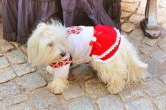 Little dog in vyshyvanka, Lviv, Ukraine royalty free stock photography