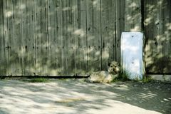 Little dog waits for owners royalty free stock photo