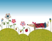 Little dog walking on flowering meadow