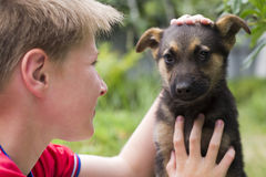 Little dog. Young dog and boy teenager Royalty Free Stock Photos