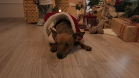 Little doggy. Christmas tree and holidays mood. 4K UHD. stock video footage