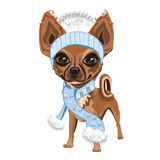 Little doggy in hat. A little dog in a knitted hat with a bubo. Colored Vector illustration Stock Photo