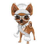 Little doggy in hat. A little dog in a knitted hat with a bubo. Colored Vector illustration Stock Images