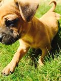 Little doggy. My cute doggy play in grass Stock Photo