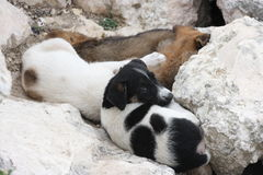 Little dogs. In the midst of stones Royalty Free Stock Image