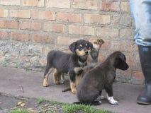 Little dogs in the nature. Some cute dogs and leg in the right side algunos perros lindos y una pierna en el lado derecho stock images