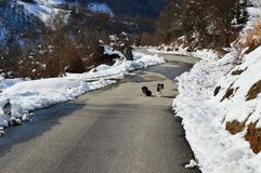 Little dogs on the road. Two little dogs on the road royalty free stock photography