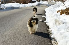 Little dogs on the road. Two little dogs on the road stock photo