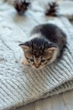 Little domestic cat on wool knitting background. Close up. Selective focus stock photography