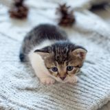 Little domestic cat on wool knitting background. Close up. Selective focus stock images