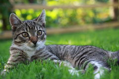 Little domestic cat Stock Photos