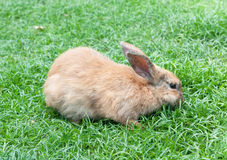 Little domestic rabbit on a green grass. Closeup stock photography