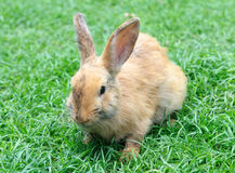 Little domestic rabbit on a green grass. Closeup stock photo