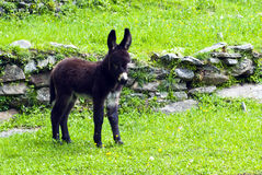 Little donkey Stock Photos