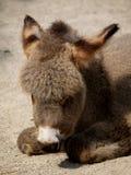 Little donkey stock photos