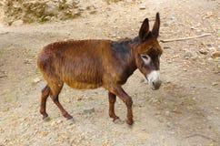 Little donkey royalty free stock images