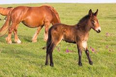 Little donkey and horse Stock Photo