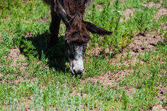 Little donkey outdoors Royalty Free Stock Photos