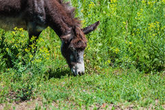 Little donkey outdoors Stock Images