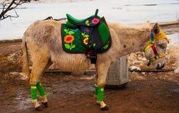 Little donkey Stock Photo