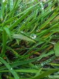 Droplet. Little droplet somewhere in nature grass Stock Images