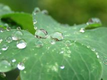 Little drops of rainwater on green leaves. royalty free stock image