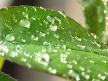 Little drops of rainwater on green leaves. stock photo
