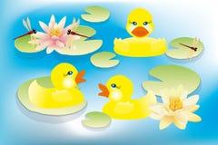 Little duck Stock Image