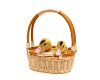 Little ducklings sitting in a basket on a white background Stock Photos