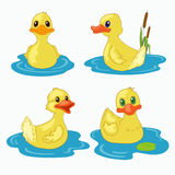 Little ducks. Little yellow ducks on the blue lake vector illustration