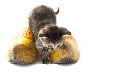 Little dutch cat Stock Photos