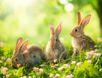 Little Easter Bunnies. Rabbits. Art Design of Cute Little Easter Bunnies in the Meadow stock photography
