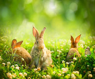 Little Easter Bunnies. Rabbits. Art Design of Cute Little Easter Bunnies in the Meadow Royalty Free Stock Images
