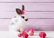 Easter Bunny and eggs. The Little Easter Bunny and eggs Stock Photo