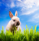 Little Easter bunny on green grass stock image