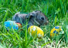 Little easter bunny sitting in the grass Royalty Free Stock Photos