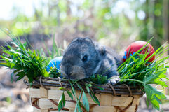 Little easter bunny sitting in the grass Royalty Free Stock Images