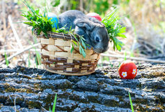 Little easter bunny sitting in the grass Royalty Free Stock Photography