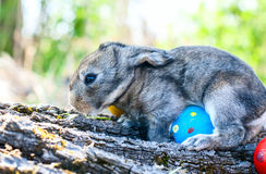 Little easter bunny sitting in the grass Royalty Free Stock Image