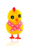 Little easter chick Stock Images