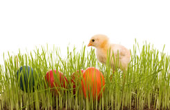 Little easter chick with colorful eggs Stock Photography