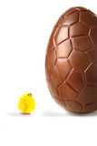Little easter chick looking up at chocolate egg Stock Photos