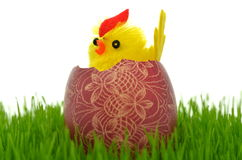 Little easter chicken in easter egg Royalty Free Stock Photography