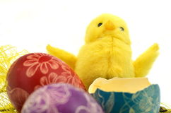 Little easter chicken and easter eggs Royalty Free Stock Images