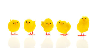 Little easter chicks Stock Photos
