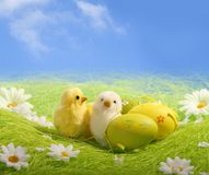 Little Easter Chicks Royalty Free Stock Photography