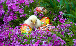 Little Easter chicks on grass Royalty Free Stock Photos