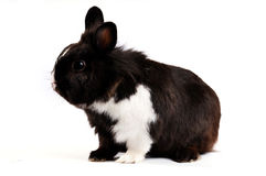 Little easter hare Royalty Free Stock Photos