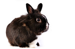 Little easter hare Royalty Free Stock Image